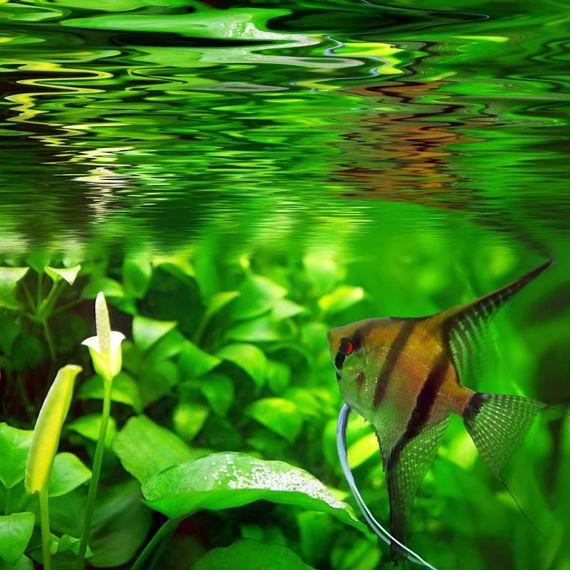 damit sich aquarienpflanzen und fische wohlfuhlen muss man einiges bei der pflege und ausrustung des aquariums beachten foto djd eheim