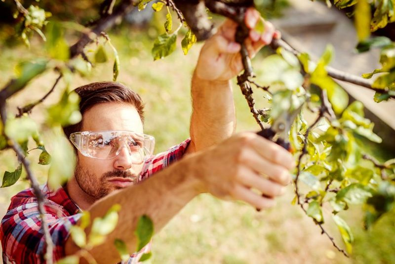 Zwetschgenbaume Richtig Schneiden 7 Tipps Fur Gutes Gelingen